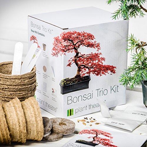 GeschenkIdeen.Haus - Eigenen Bonsai Baum aufziehen