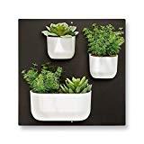 Wandgarten - Magnetischen Pflanzentöpfe für die Wand